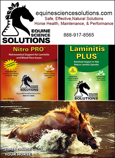 Horse Laminitis Nutritional Support