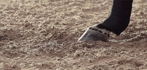 The best horse arena footing for your horse.