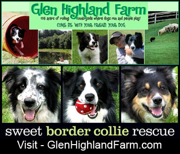 Glen Highland Farm