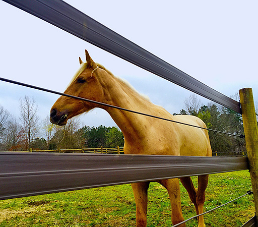 Fences as psychological barriers for horses.