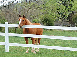 Horse Fencing Article