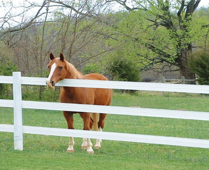 Flex Fence by Ramm Horse Fencing and Stalls