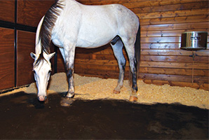Horse Joint Health Detection and Management