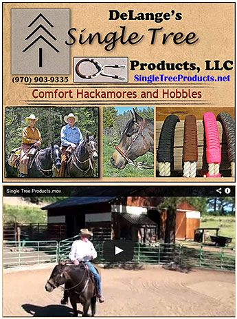 Hackamores for Horses