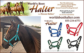 The World's Best Horse Halter
