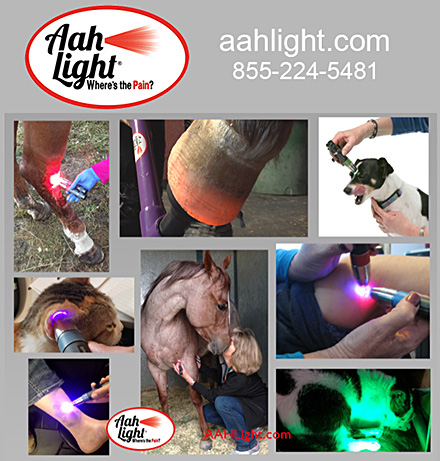 Aah Light Light Therapy for Horses and Dogs