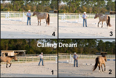 Dream is our demo horse for articles that teach and how products are used.