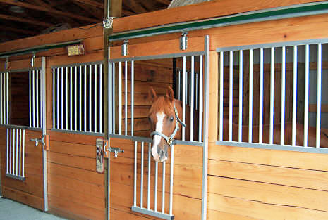 Stall openings for Socialization