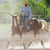 Controlling Dust for Healthy Horse Respiratory System!