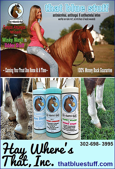 Horse Fungal Treatment that blue stuff.