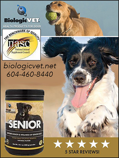 Senior Dog Health Supplements