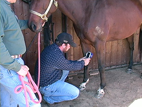 Thermal Imaging and Horses