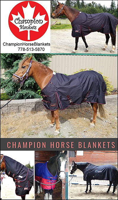 Champion Blankets for Horses