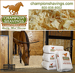 Champion Shavings Horse Bedding