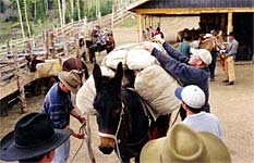 Packing horses and mules.