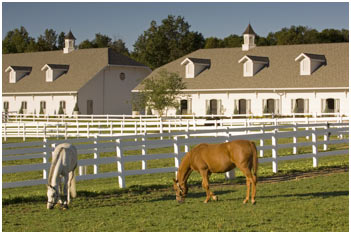 Expensive Horse Stables Images