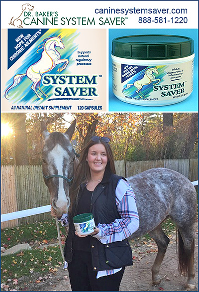 System Saver Horse Supplement