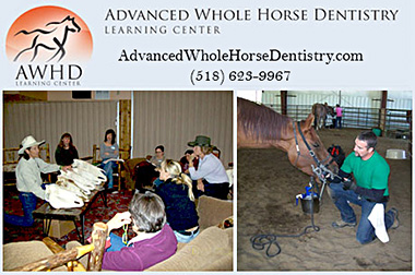 Advanced Whole Horse Dentistry