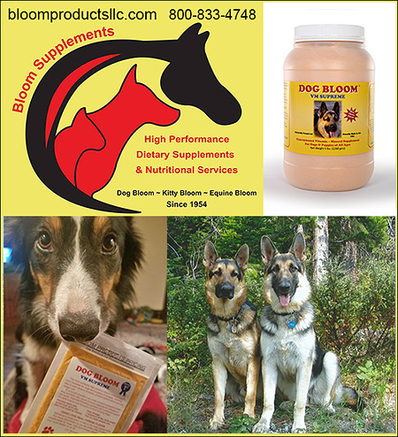 Bloom Health Supplements for Dogs