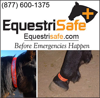 Horse Safety Products