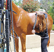 Benefits of Equine Massage