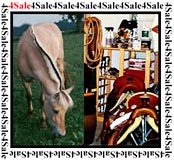 Horse Tack and Horses for sale