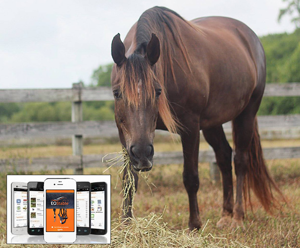 Horse Apps for Horse Owners