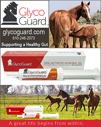 GlycoGuard Oral Microbial Gel for Horse Foals