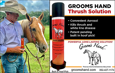 Grooms Hand Thrush Solution for Horses