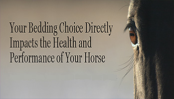 Choosing horse bedding for best horse health!