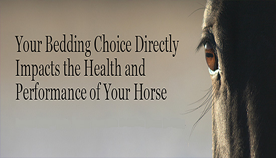 Horse Stall Bedding and Horse Health