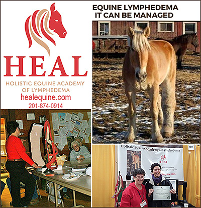 Holistic Equine Academy of Lymphedema