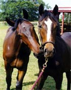 Horse Training Article Horse Biting