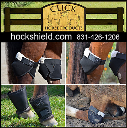 Horse Hock Shield