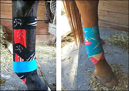 Equi-Taping assists by supporting muscles and tendons.