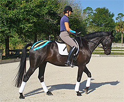 The value of Elastic Kinesiology tape for equine.