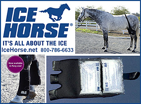 Ice Horse Cold Therapy Products for Horses!