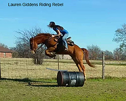 Horse Jumping Tips for Western Riders