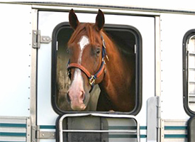 Horse Travel Supplement Tips