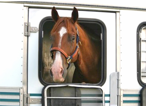 Horse Travel Tips