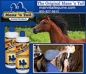 Original Main n Tail Horse Shampoo