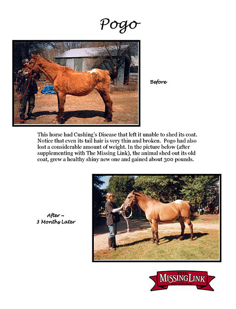 Helping horses with cushings through better nutrition