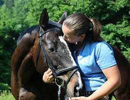 A career with horses you will love.