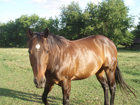 Feral or Domestic Horses