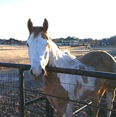 Taking care of our horses using health supplements