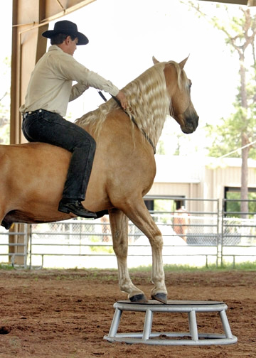 Helping horses with arthritis