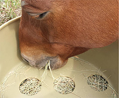 Horse Grazing Benefits