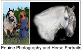 Equine Photographers and Horse Portrait Artists.