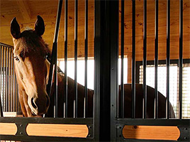 Keeping Horses Safe by Accident Proofing