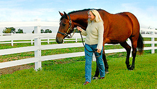 Horse Fencing Projects